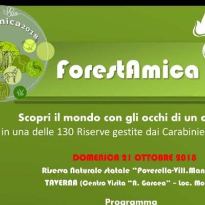 """""""ForestAmica"""": La Sila Piccola mostra le meraviglie della biodiversità delle foreste in veste autunnale"""