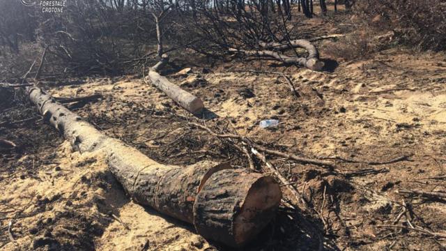 Isola Capo Rizzuto (KR): Sorpresi ad abbattere alberi nella pineta di Sovereto, due arresti