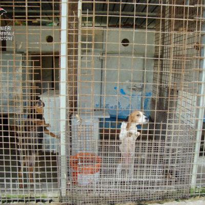 Scoperto canile abusivo a Rocca di Neto (KR), una denuncia