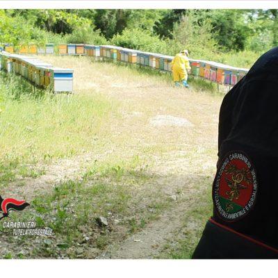 Nomadismo apiario: controlli, denunce e sanzioni dei Carabinieri Forestali