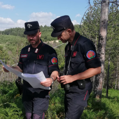 San Giovanni in Fiore(CS), finanziamenti per un rimboschimento: tre persone denunciate per truffa