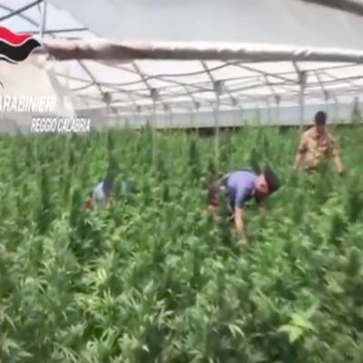 VIDEO | Sequestrata droga per 13 milioni di dosi e sottratti proventi per 100 milioni di euro alla criminalità