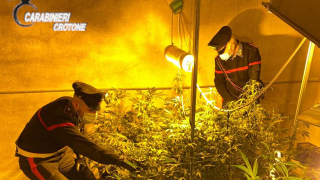 Cutro (Kr),  trasforma un magazzino in serra per marijuana: arrestato 29enne