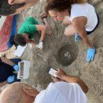 Nidificazione della tartaruga caretta caretta sulle spiagge del Parco Marino Baia di Soverato