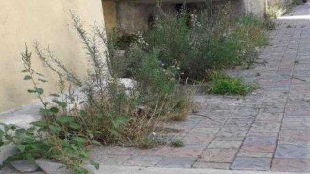 Crotone, incuria in via Libertà: colletta per curare il verde incolto